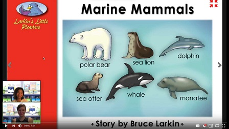 Marine Mammals video image